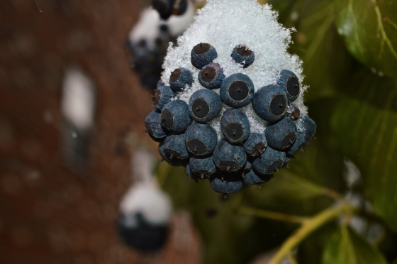 Community of Berries