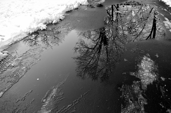 The World in a Puddle