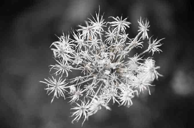 flowersnow